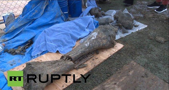 Des restes de mammouth découverts aux Etats-Unis