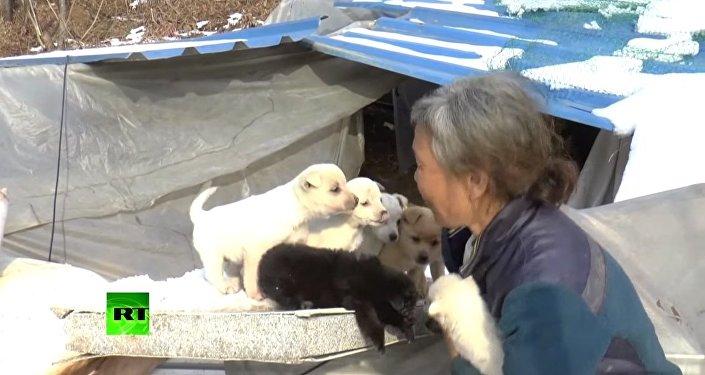 Une Sud-Coréenne sauve 200 chiens de l'abattoir