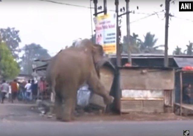 L'éléphant destructeur