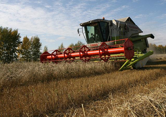 la récolte de blé