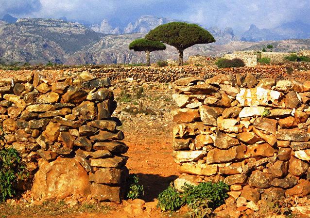 l'île de Socotra
