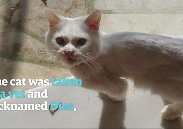 L'incroyable histoire d'un chat de migrants irakiens