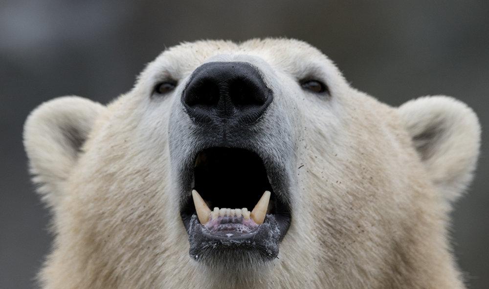 Quoi de neuf dans le monde animal?