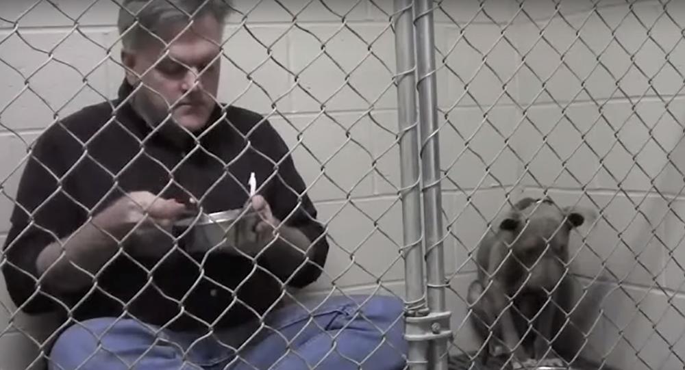 Un vétérinaire mange dans une cage pour sauver une chienne