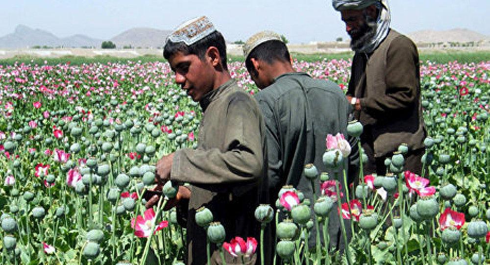 L'OTAN et l'OTSC doivent lutter contre la drogue afghane