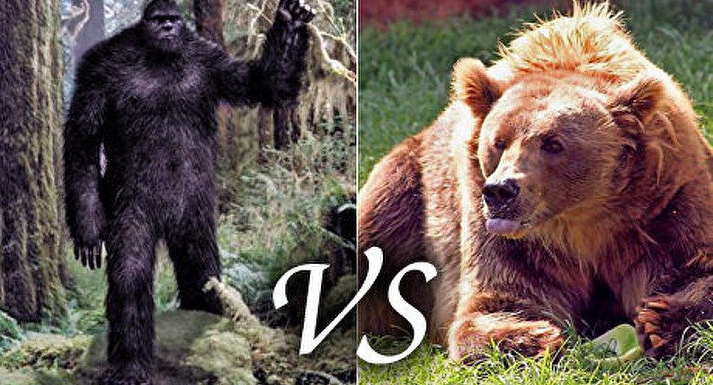 Les yetis de l'Altaï menacent les ours du Kouzbass