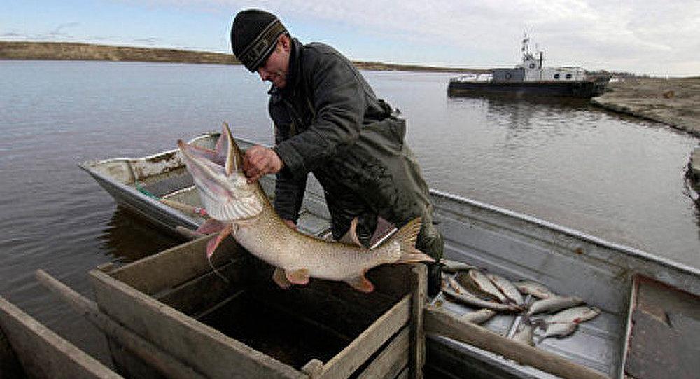 La pêche tout sur la chasse des brochets et les perches
