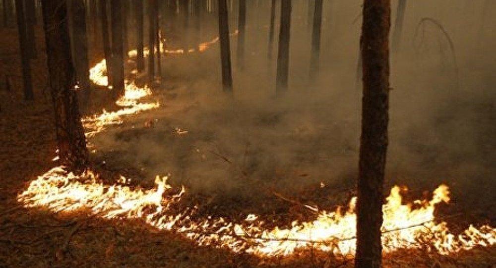 Situation en matière de forêt en Extrême-Orient russe