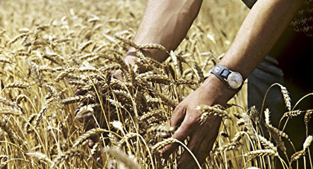 La Russie exporte 2,2 millions de tonnes de blé