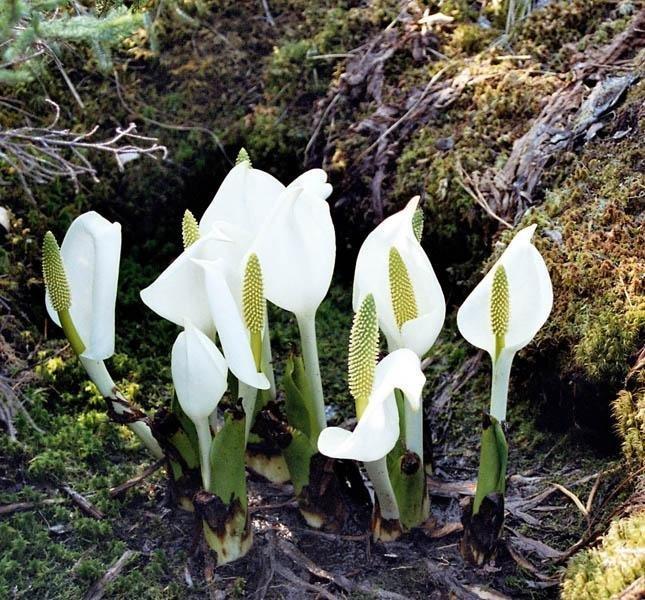 La flore de la réserve est très variés et étonnante