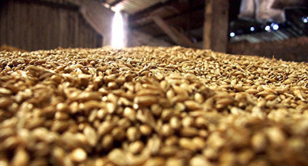 La Russie a exporté 21,2 millions de tonnes de céréales