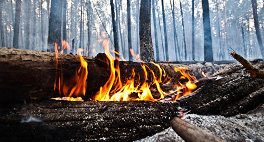 Russie/incendies de forêt : plus de 204 hectares ravagés