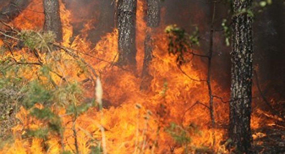 Krasnodarski kraï : plus de 50 incendies de forêt