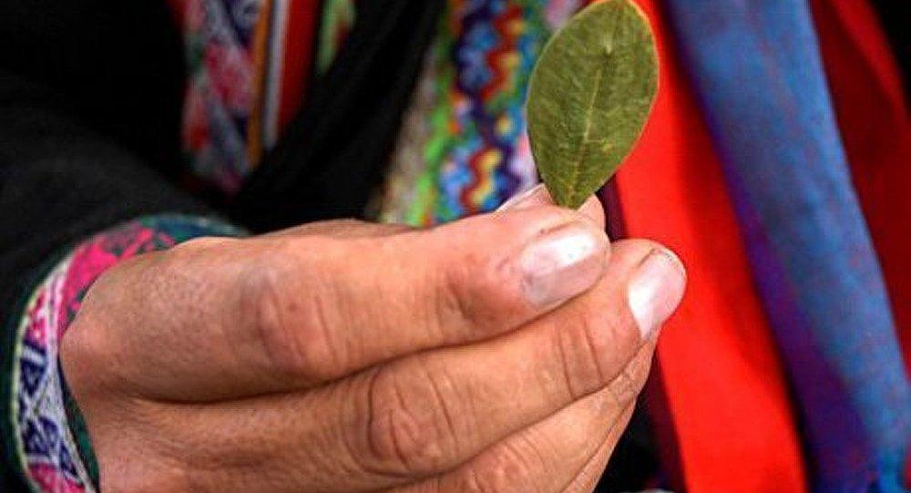 Le Kremlin veut interdire aux Boliviens de mâcher des feuilles de coca