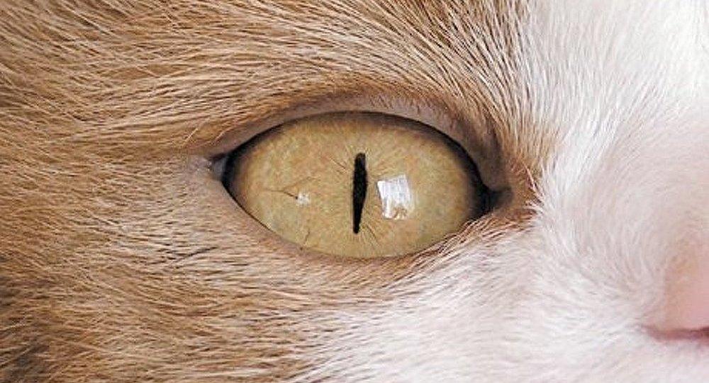 Les chats domestiques menacent l'écosystème de la Terre