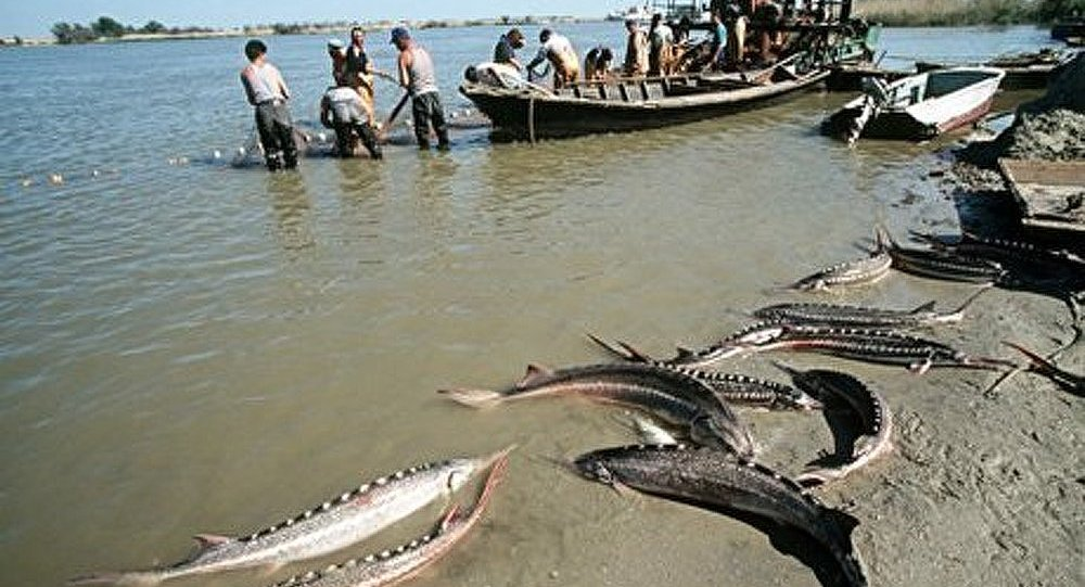 Les tentes à stavropole pour la pêche