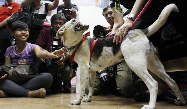 Philippines : un chien, qui a sauvé les enfants, accueilli comme un héros