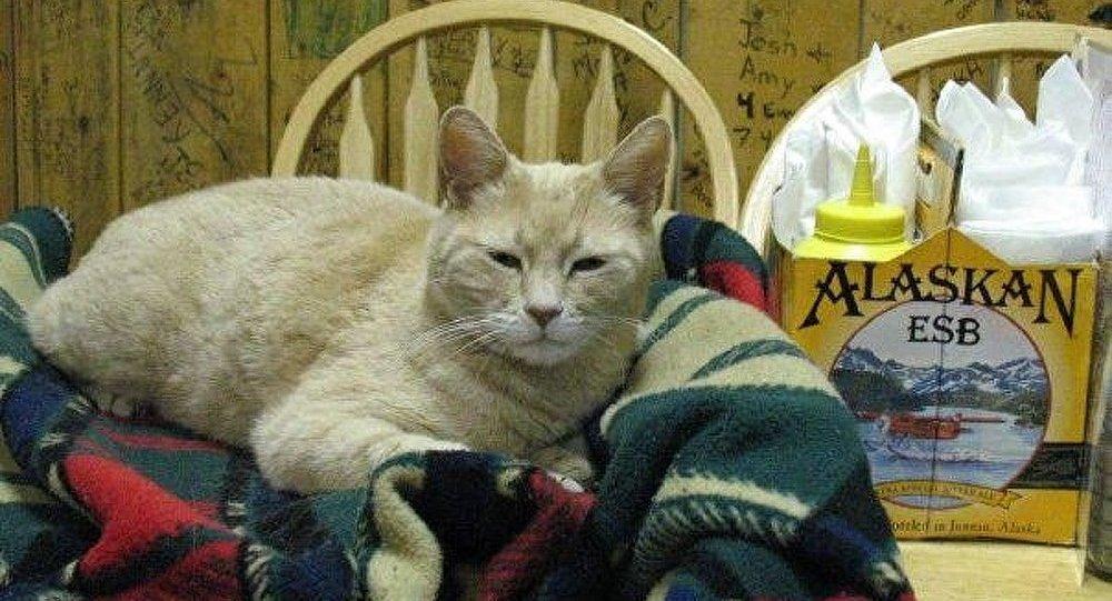 Le chat-maire a été attaqué en Alaska