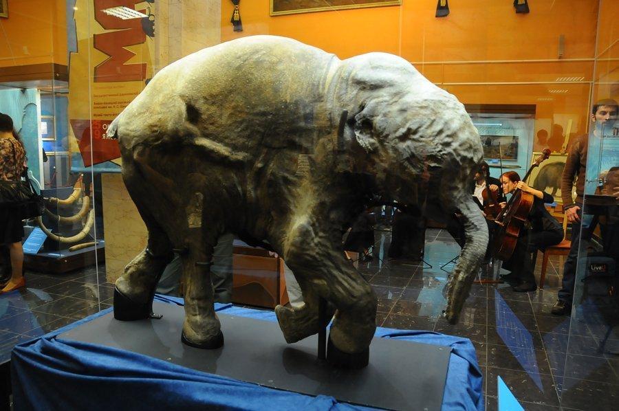 Une exposition qui s'appelle Les mammouths arrivent vient d'ouvrir au musée Darwin de Moscou. Cette exposition est organisée en collaboration avec le complexe d'exposition Chemanovski du district autonome des Iamal-Nenets et le musée-théâtre NASH lednikovy period (Notre âge de glace). L'exposition raconte la structure anatomique et de l'apparence extérieure de ces géants préhistoriques, évoquant également leur mode de vie. Au centre de l'exposition, le bébé mammouth Liouba, montré au grand public pour la première fois.