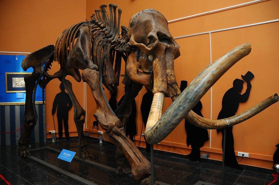 Le squelette présenté à l'exposition dans l'exposition Les mammouths arrivent va permettre aux visiteurs de comparer les tailles d'un adulte et d'un bébé mammouth découverts en 2007 sur la presqu'île de Iamal par l'éleveur de rennes de Iouri Khoudi. Le bébé mammouth fut nommé Liouba en l'honneur de son épouse.