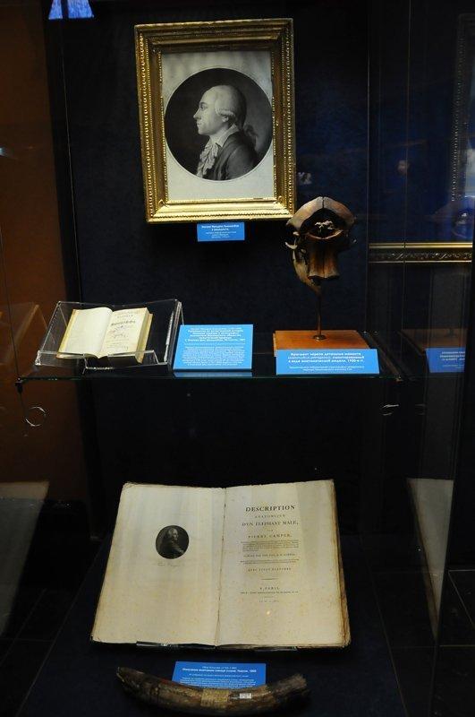Des mammouths au musée Darwin de Moscou