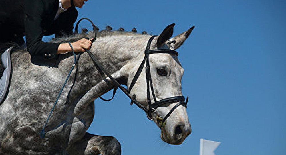 Renaissance de l'équitation en Russie