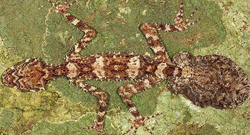En Australie, des espèces découvertes dans une zone jusqu'alors inexplorée