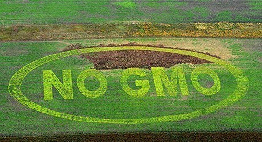 Les OGM tuent
