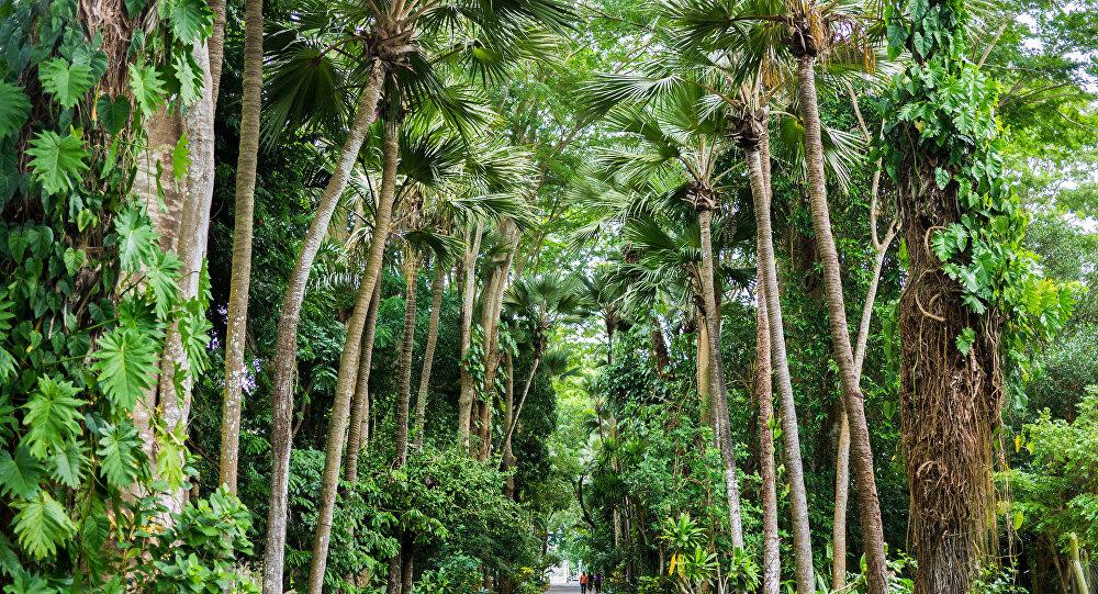 Assez Des chercheurs expliquent le vivre-ensemble des arbres tropicaux  MB23