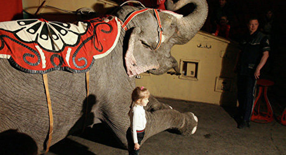 Protestation à Mexico contre l'interdiction des animaux au cirque