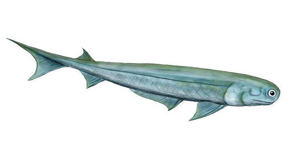 Un poisson primitif sans doute doté de la vision des couleurs