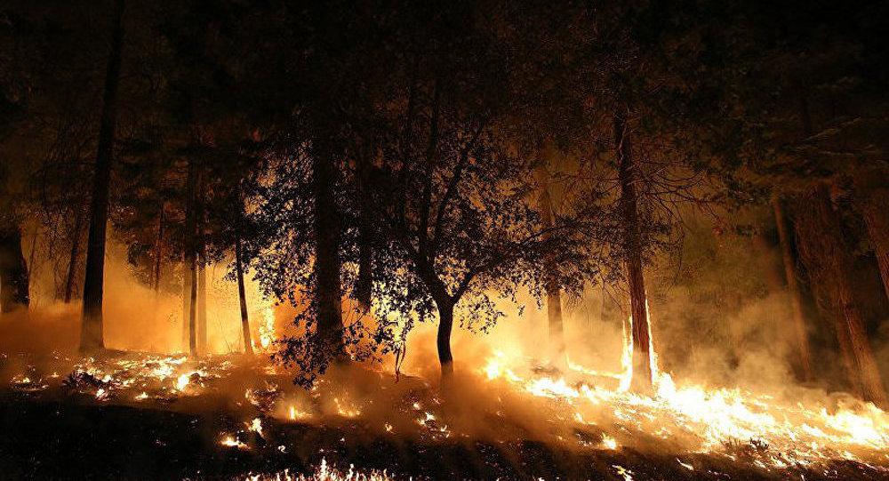 Feux de forêt en Australie: les pompiers dans une course contre la montre