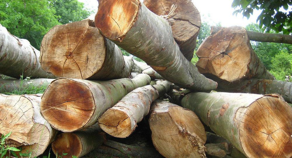 Un Allemand abat 800 arbres à la main
