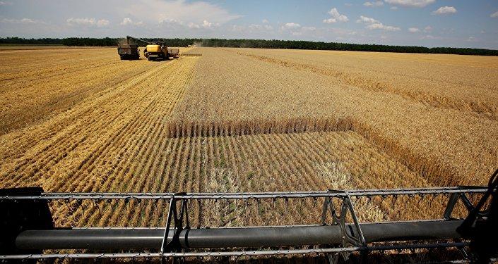 Récolte de blé à Krasnodar