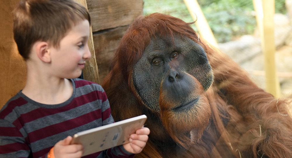Cheveux roux? Un zoo vous offre l'entrée libre pour la Journée de l'Orang-outang