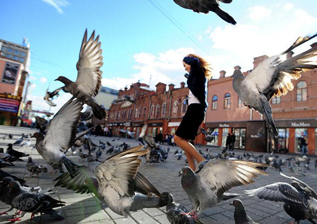 Oiseaux, image d'illustration