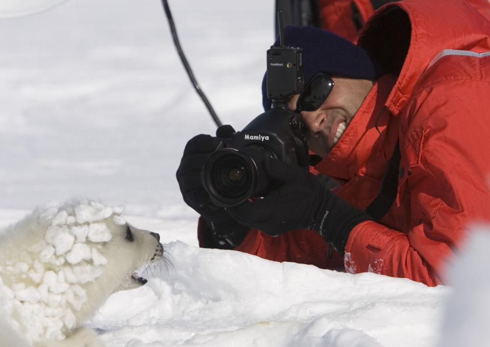 Les bébés-phoques, très petits et sans défense