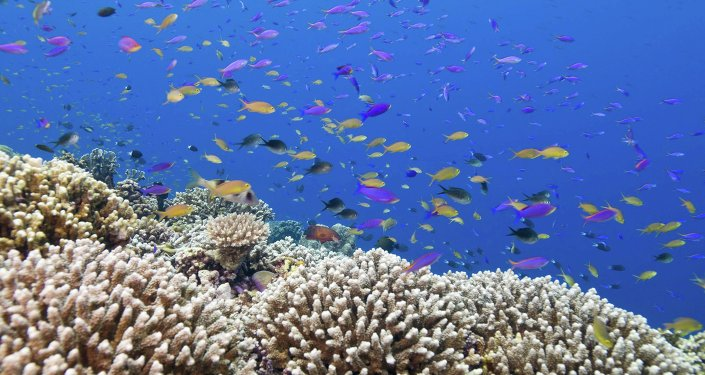 Les coraux