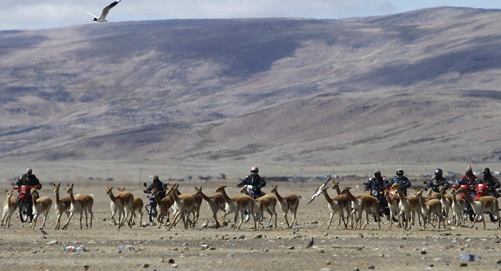 Bolivie (image d'illustration)