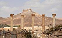 4.000 djihadistes tentent à nouveau de s'emparer de Palmyre
