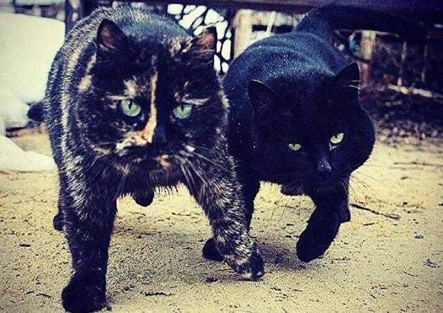 Le duo malfaiteur