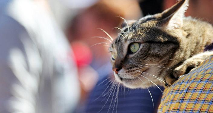 Une nouvelle maison pour un lion multir cidiviste for Adaptation chat nouvelle maison