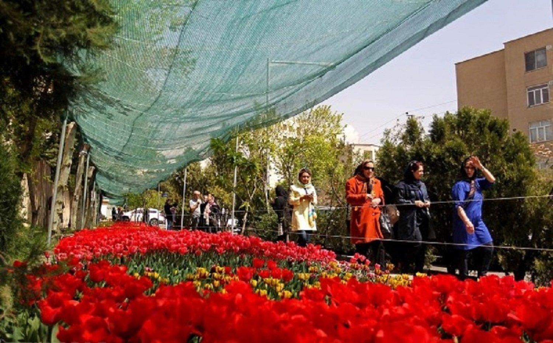 Un voile d'ombrage protège les tulipes du soleil.