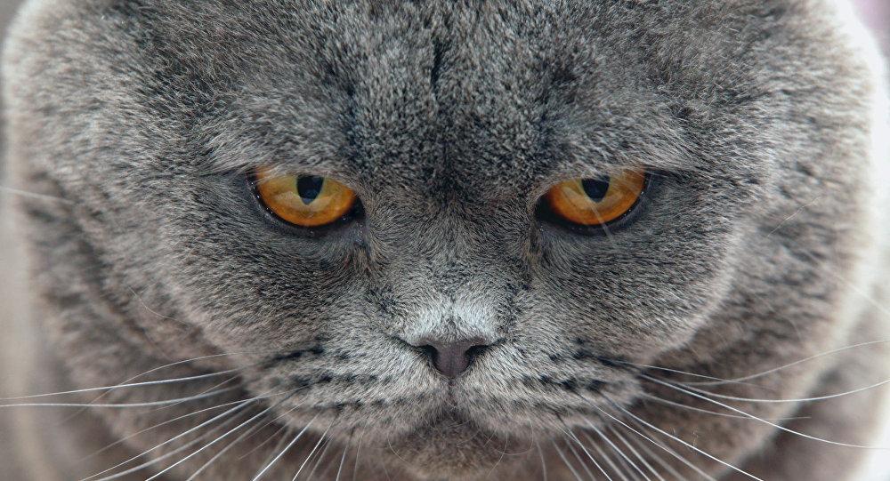 Les chats bien plus intelligents qu'on ne le pensait