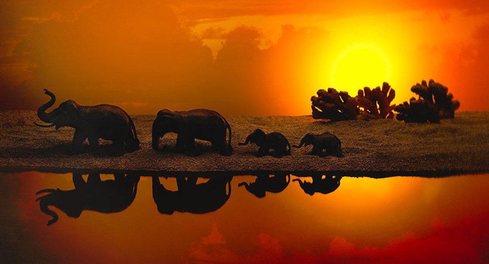 Un troupeau d'éléphants et des arbres faits en gingembre.