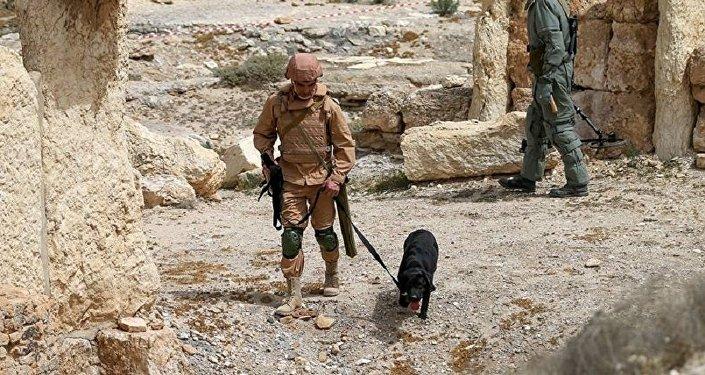sapeurs russes à Palmyre