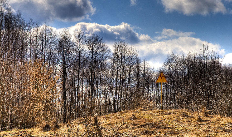 Forêt rousse
