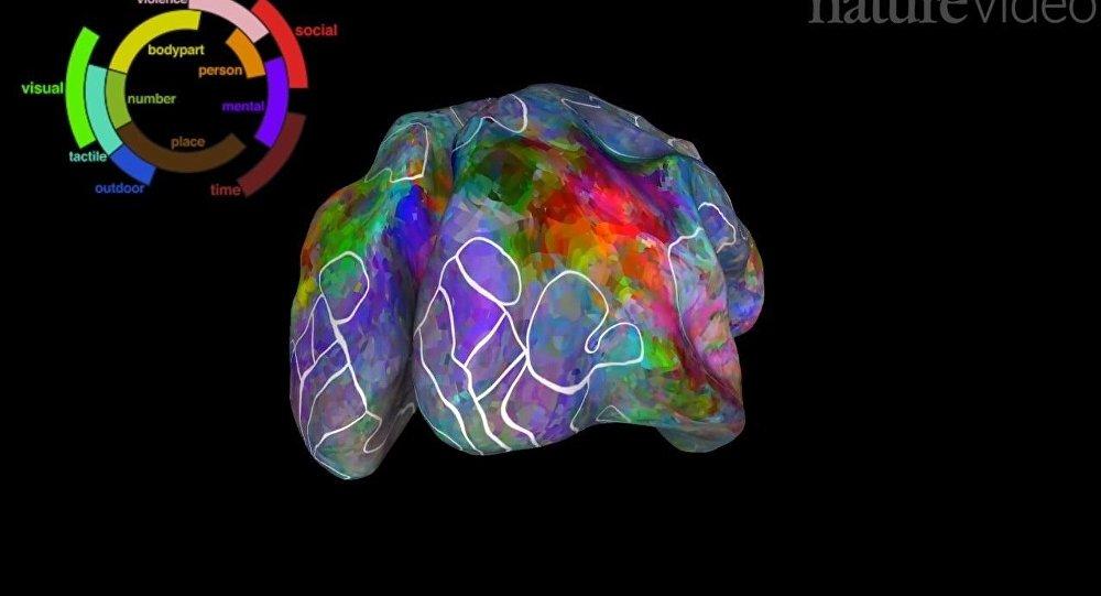 L'atlas du cerveau