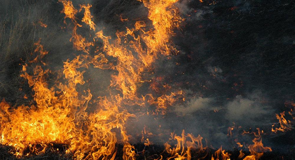 Syrie: les terroristes soupçonnés de mettre le feu aux forêts de Lattaquié
