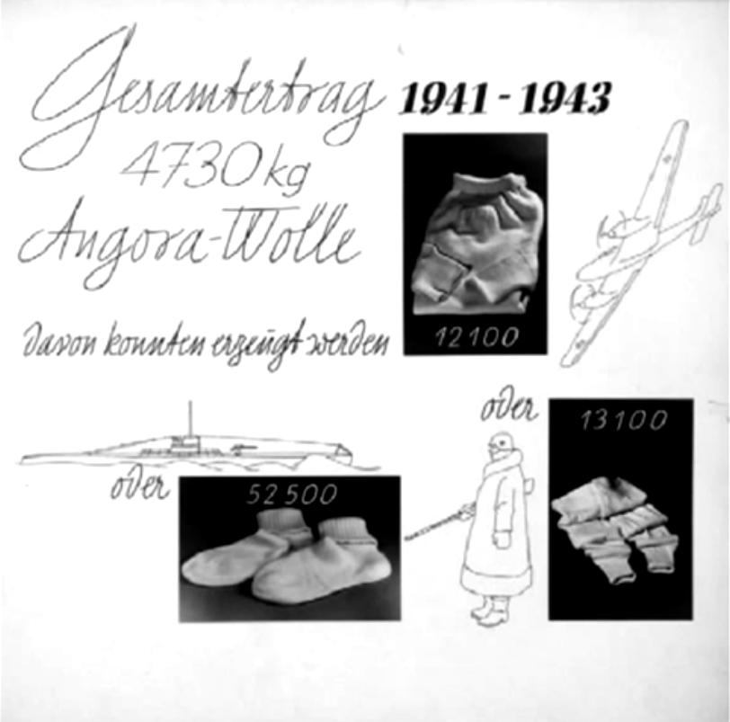 Projet Angora